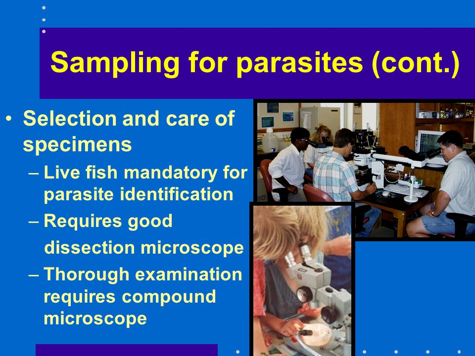 Sampling for parasites (cont.) Selection and care of specimens –Live fish mandatory for parasite identification –Requires good dissection microscope –Thorough examination requires compound microscope