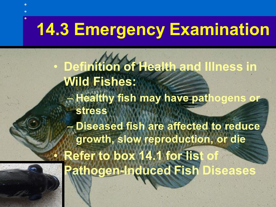 14.3 Emergency Examination Definition of Health and Illness in Wild Fishes: –Healthy fish may have pathogens or stress –Diseased fish are affected to reduce growth, slow reproduction, or die Refer to box 14.1 for list of Pathogen-Induced Fish Diseases