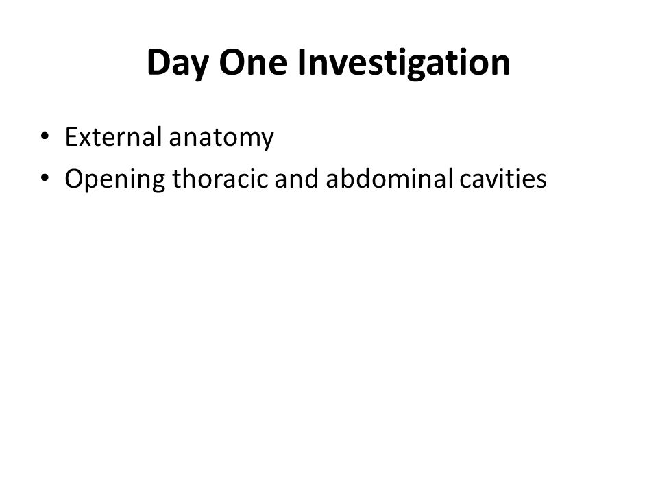 Day Two Investigation Abdominal Cavity – Digestive System – Urogenital System (Excretory & Reproductive) Thoracic Cavity – Circulatory System – Respiratory System