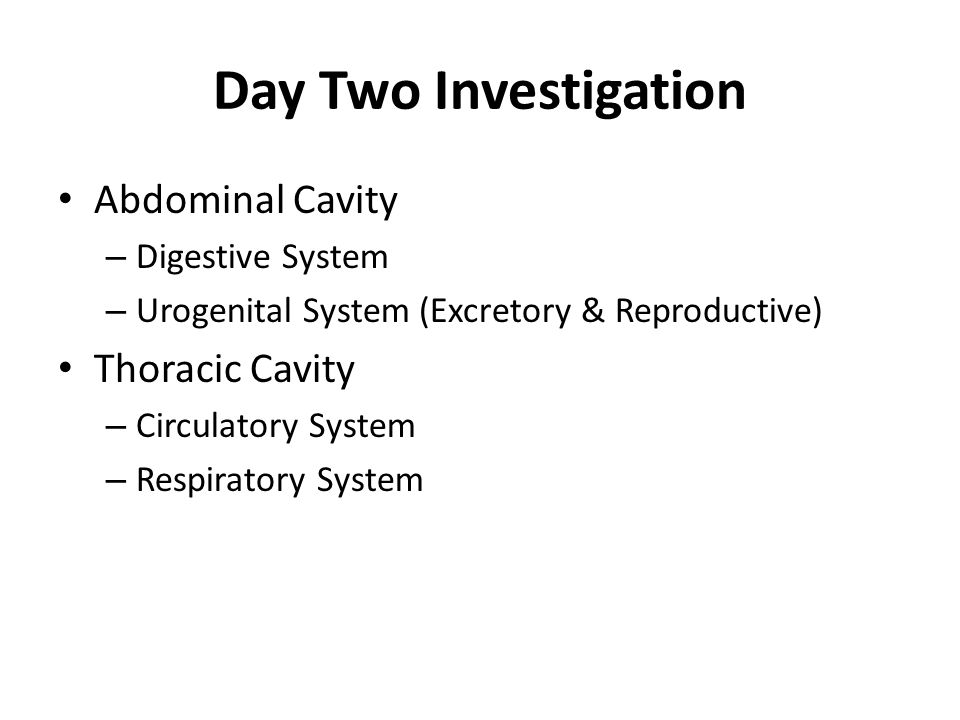 Locate the exit openings for the digestive, excretory, and reproductive body systems.