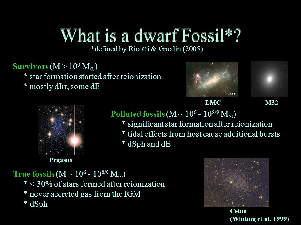 What is a dwarf Fossil*.