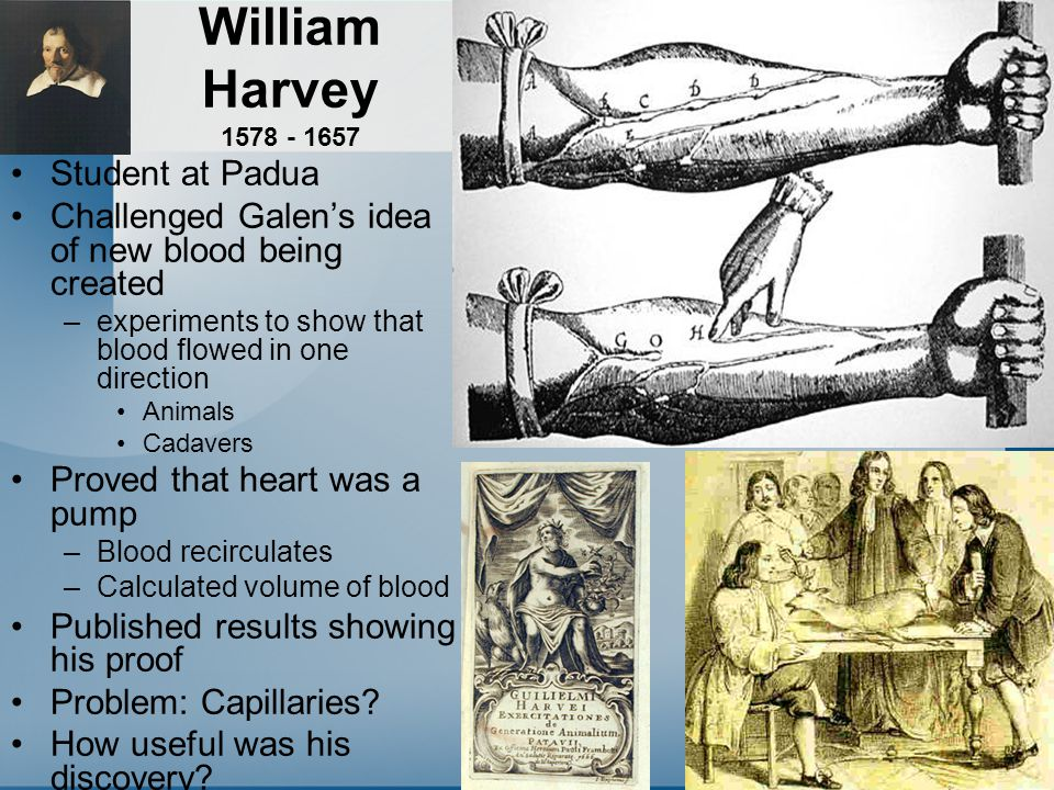 William Harvey 1578 - 1657 Student at Padua Challenged Galen's idea of new blood being created –experiments to show that blood flowed in one direction Animals Cadavers Proved that heart was a pump –Blood recirculates –Calculated volume of blood Published results showing his proof Problem: Capillaries.