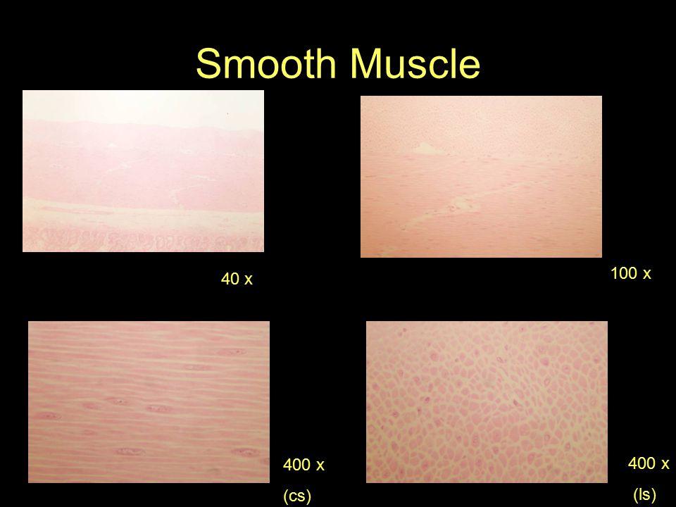Smooth Muscle 40 x 100 x 400 x (cs) 400 x (ls)