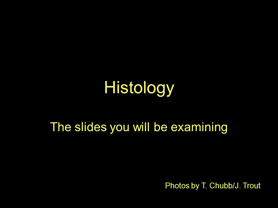 Histology The slides you will be examining Photos by T. Chubb/J. Trout