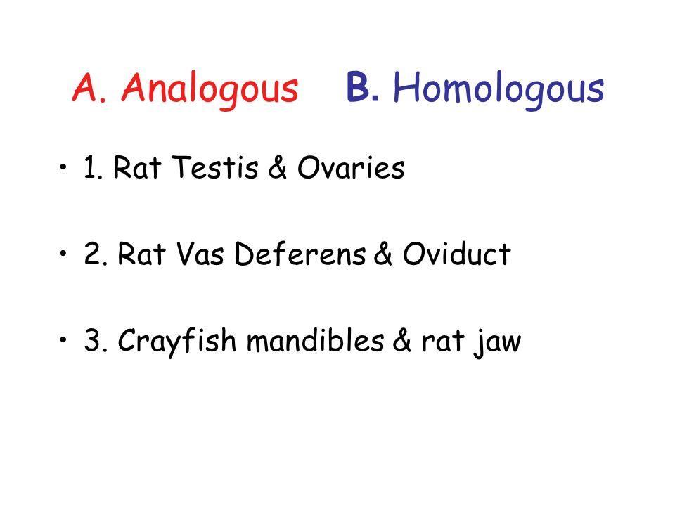 A. Analogous B. Homologous 1. Rat Testis & Ovaries 2. Rat Vas Deferens & Oviduct 3. Crayfish mandibles & rat jaw