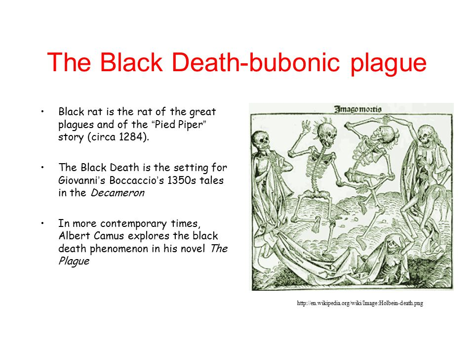 The Black Death-bubonic plague Black rat is the rat of the great plagues and of the Pied Piper story (circa 1284).