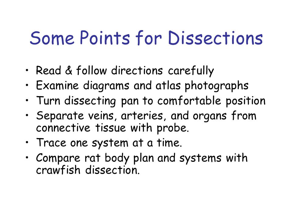 Some Points for Dissections Read & follow directions carefully Examine diagrams and atlas photographs Turn dissecting pan to comfortable position Separate veins, arteries, and organs from connective tissue with probe.
