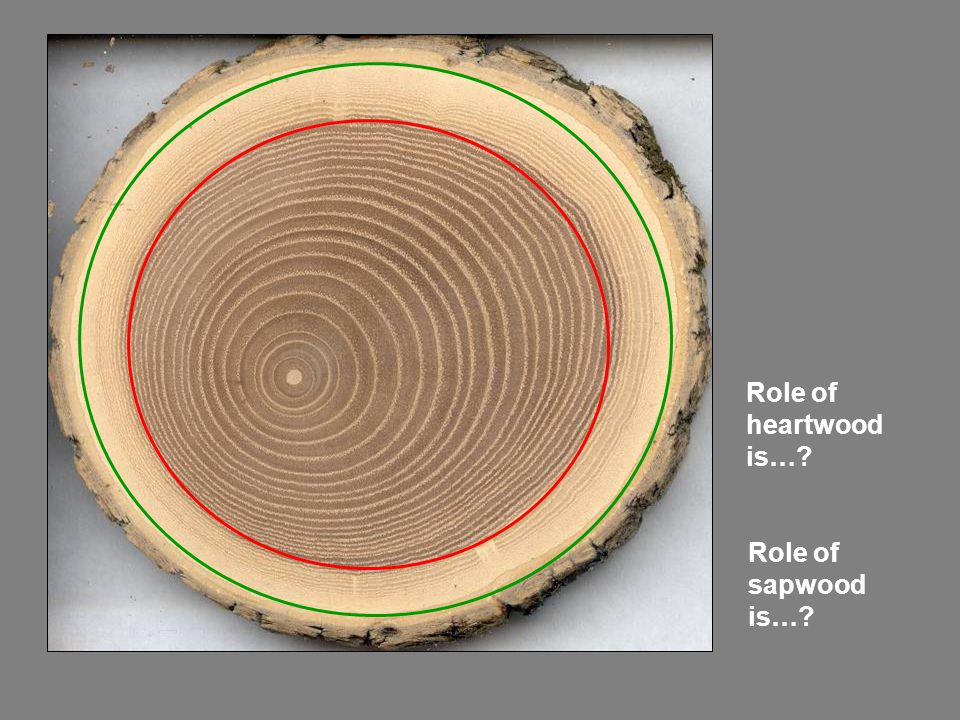 Role of heartwood is… Role of sapwood is…