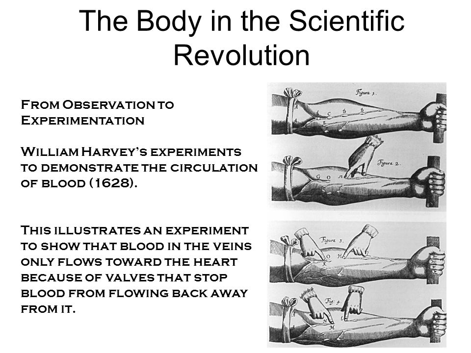 The Body in the Scientific Revolution From Observation to Experimentation William Harvey's experiments to demonstrate the circulation of blood (1628).