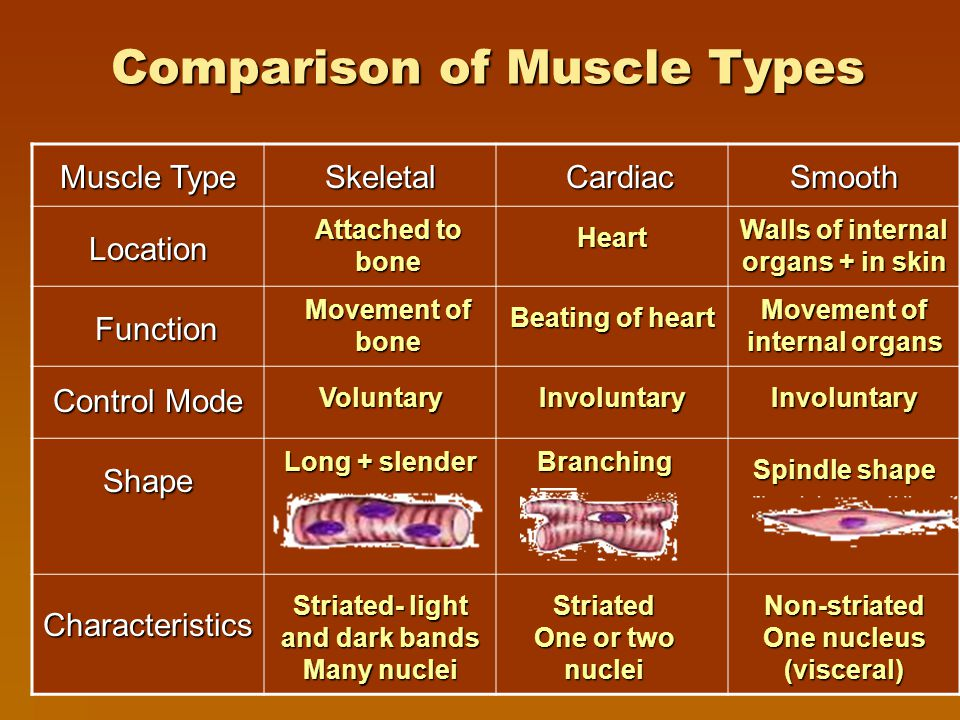 Types of Muscle Tissue TTTThere are three main types of muscle tissue SSSSkeletal (striated) CCCCardiac (heart) SSSSmooth (visceral)