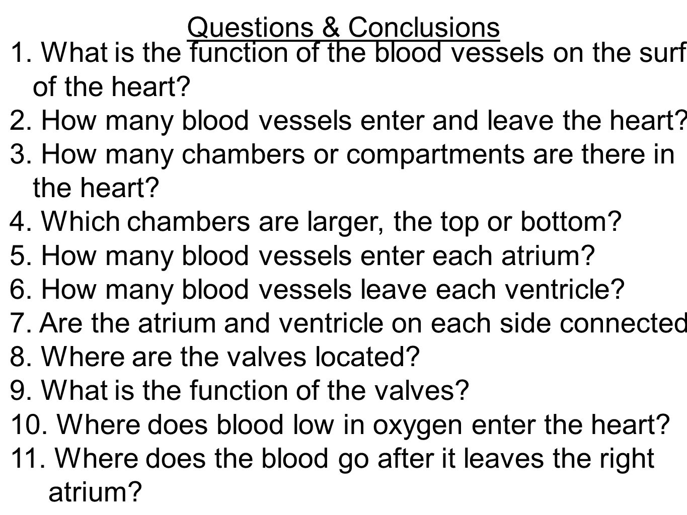 Questions & Conclusions 1. What is the function of the blood vessels on the surface of the heart? 2. How many blood vessels enter and leave the heart?