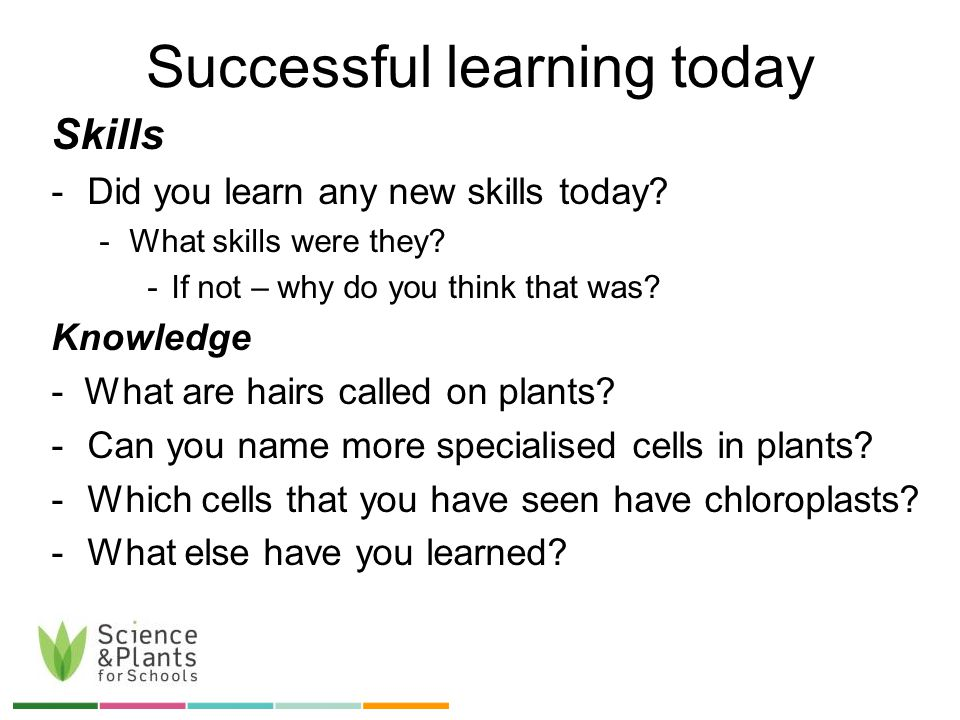 Successful learning today Skills -Did you learn any new skills today.