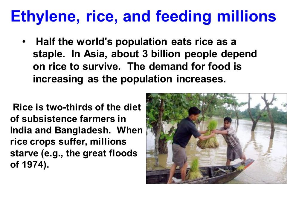 Ethylene, rice, and feeding millions Half the world's population eats rice as a staple. In Asia, about 3 billion people depend on rice to survive. The