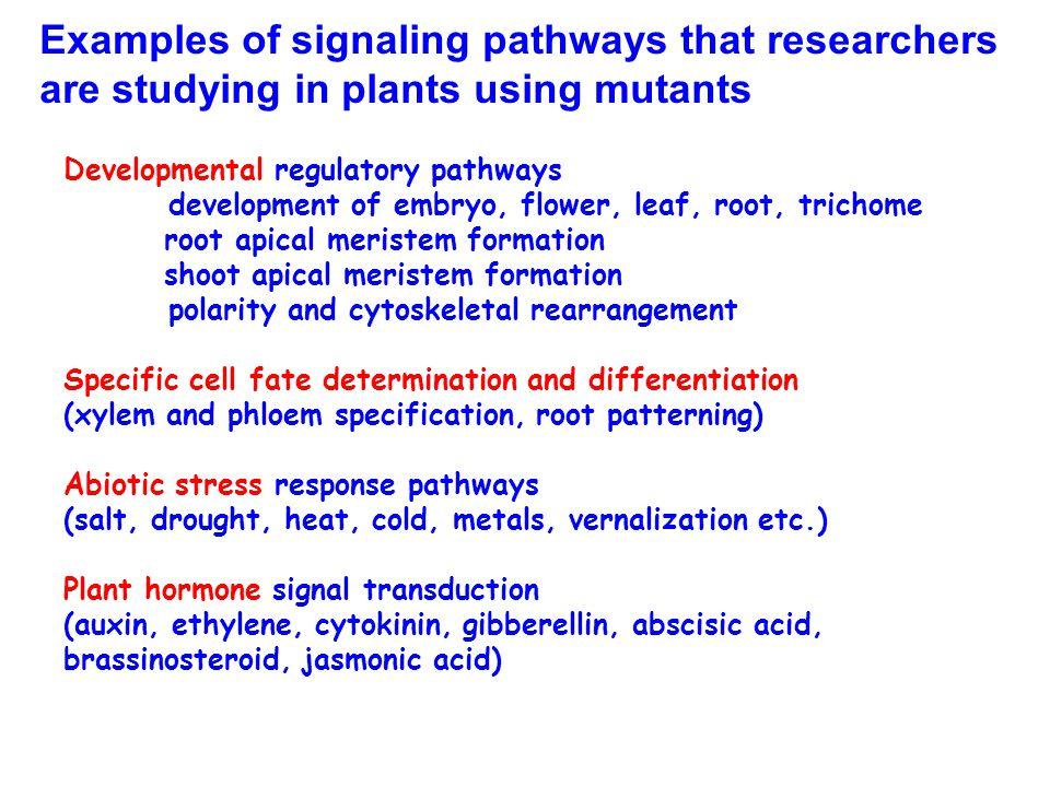 Developmental regulatory pathways development of embryo, flower, leaf, root, trichome root apical meristem formation shoot apical meristem formation p
