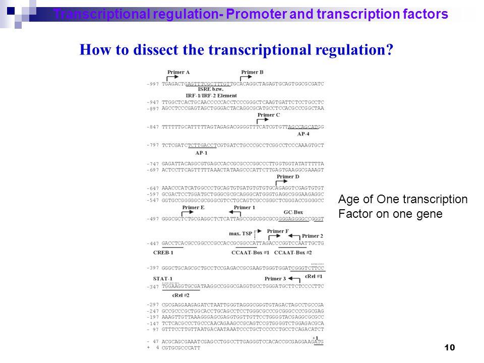 11 Transcriptional regulation- Promoter and transcription factors How to study the global gene regulation.