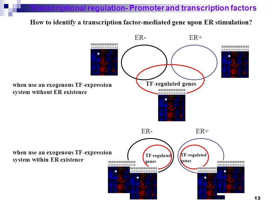 14 Chromatin IP (ChIP)