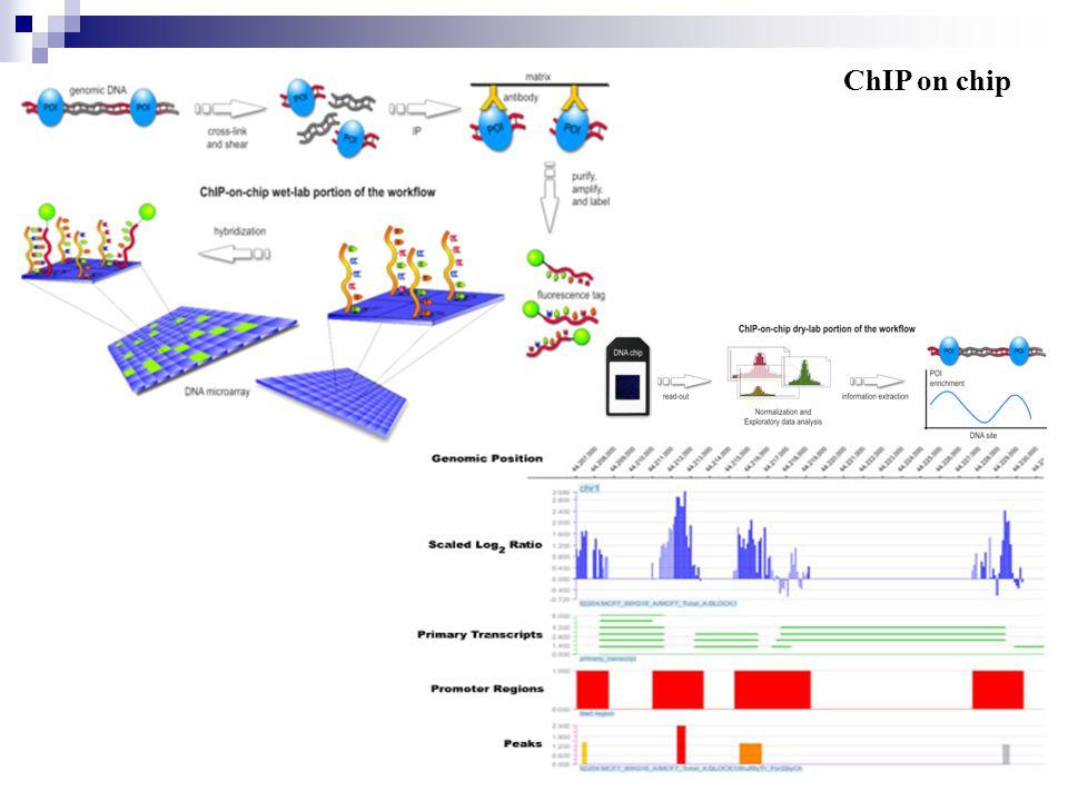 16 Transcriptional regulation- Promoter and transcription factors How to find the promoter region.