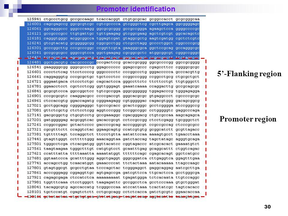 31 Promoter identification