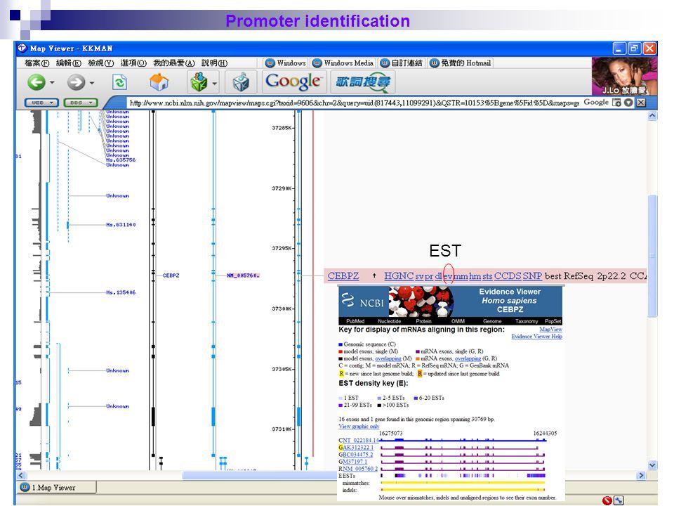 33 Promoter identification