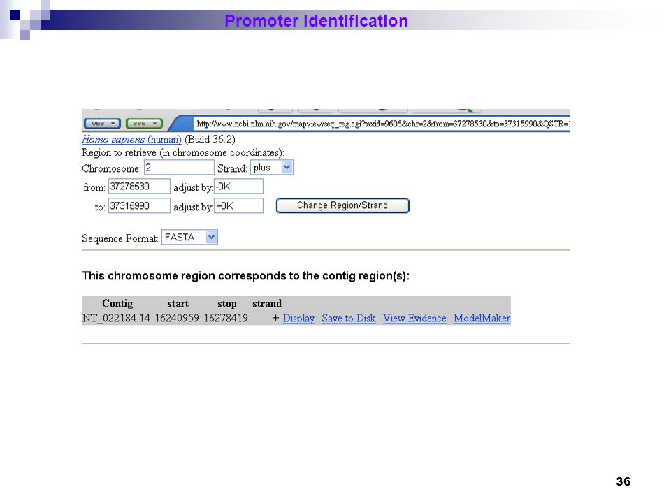37 Promoter identification Different promoter regions