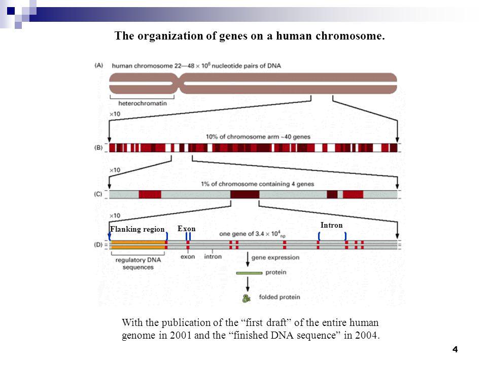 5 Transcriptional regulation Promoter and transcription factors A transcription unit Transcriptional regulation- Promoter and transcription factors