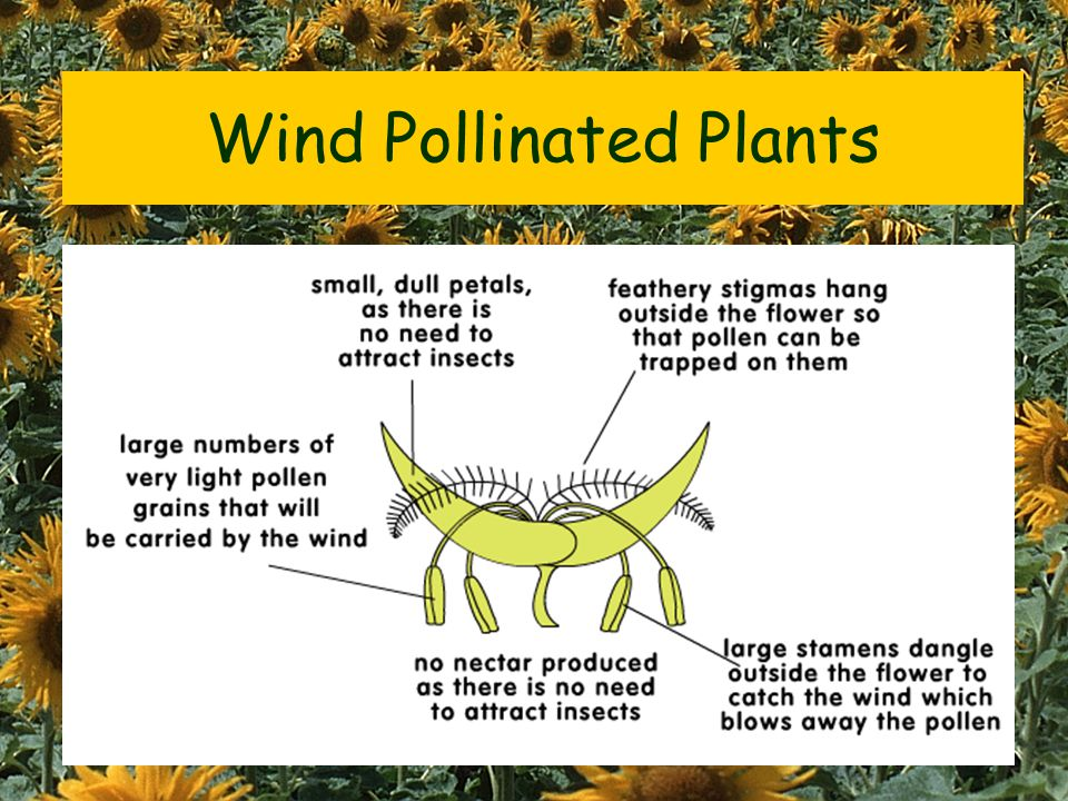 Insect Pollinated Plants