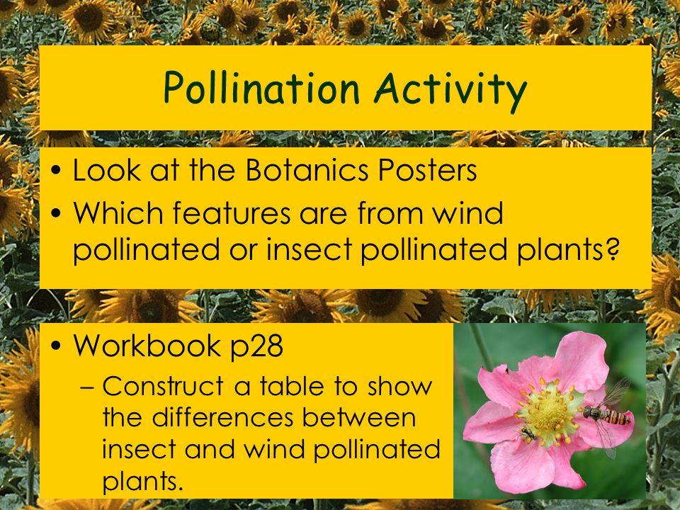 Wind Pollinated Plants