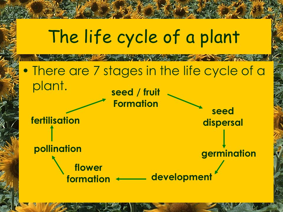 World of Plants is divided into: A- Introducing plants B- Growing plants (Pollination, Fertilisation, Asexual reproduction) C- Making food