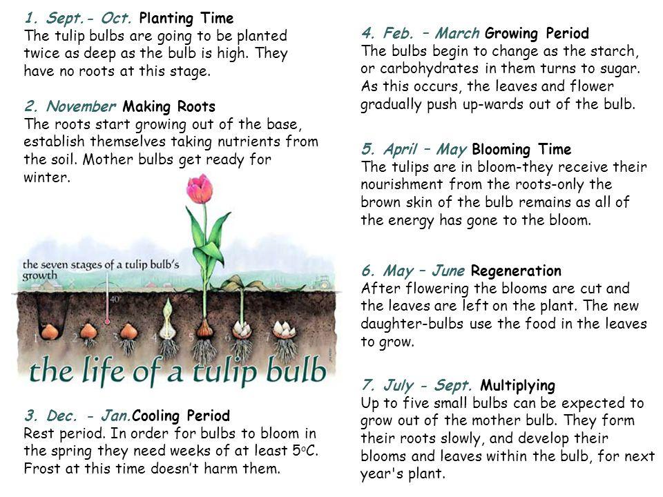 Stargazer lily Examples: snowdrop, crocus, daffodil, iris, lily, hyacinths, amaryllis, onion, garlic.