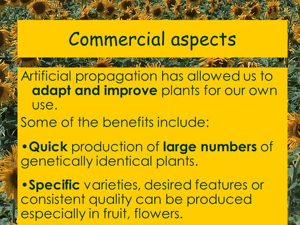 """Activity World of plants workbook p33 """"Artificial propagation- commercial advantages"""" Read page. Collect Information sheet Write short notes on it."""