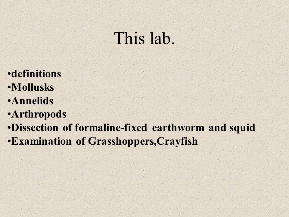 This lab.