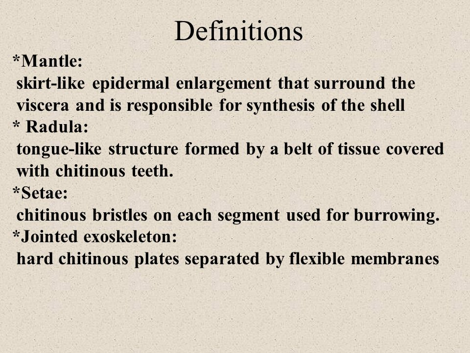Definitions *Mantle: skirt-like epidermal enlargement that surround the viscera and is responsible for synthesis of the shell * Radula: tongue-like structure formed by a belt of tissue covered with chitinous teeth.
