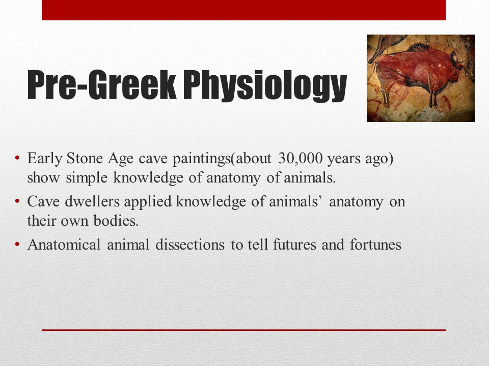 Pre-Greek Physiology Early Stone Age cave paintings(about 30,000 years ago) show simple knowledge of anatomy of animals.