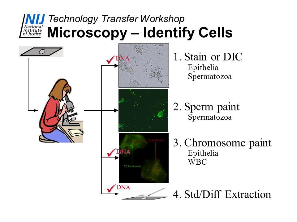 Technology Transfer Workshop Microscopy – Identify Cells 1.Stain or DIC Epithelia Spermatozoa 2.Sperm paint Spermatozoa 3.Chromosome paint Epithelia W