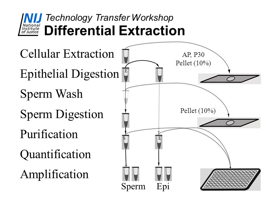 Technology Transfer Workshop Differential Extraction Cellular Extraction Epithelial Digestion Sperm Wash Sperm Digestion Purification Quantification A