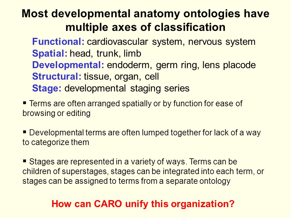 Most developmental anatomy ontologies have multiple axes of classification Functional: cardiovascular system, nervous system Spatial: head, trunk, limb Developmental: endoderm, germ ring, lens placode Structural: tissue, organ, cell Stage: developmental staging series  Terms are often arranged spatially or by function for ease of browsing or editing  Developmental terms are often lumped together for lack of a way to categorize them  Stages are represented in a variety of ways.