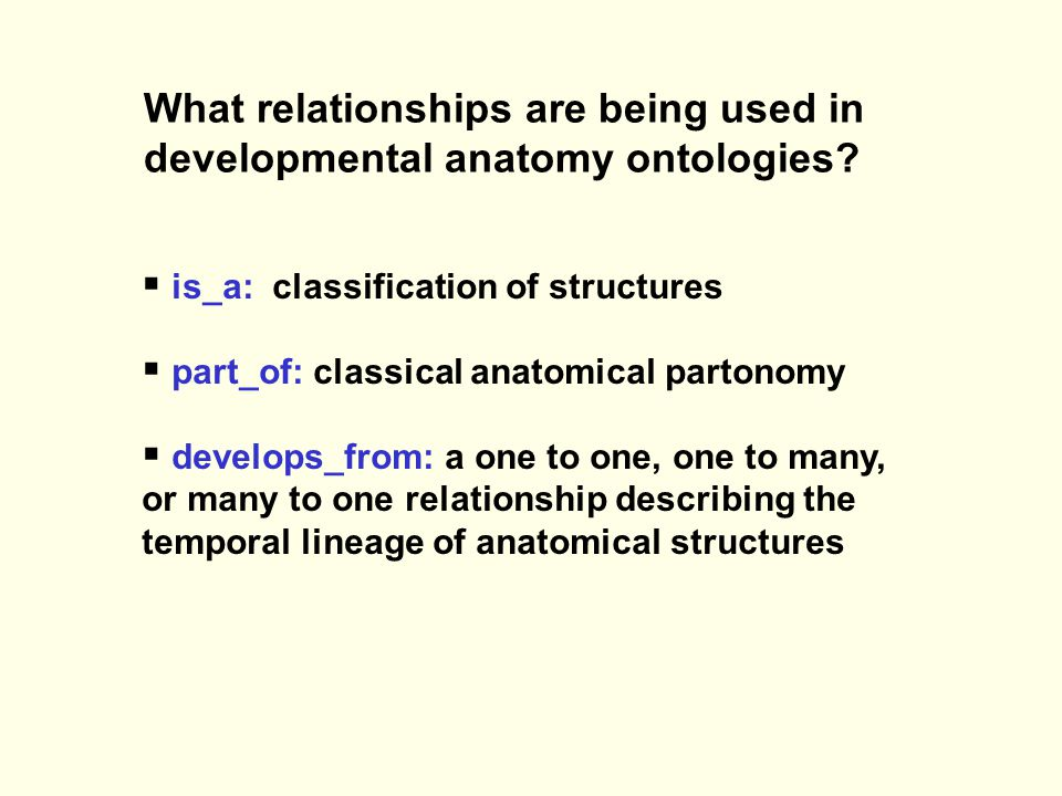 What relationships are being used in developmental anatomy ontologies.