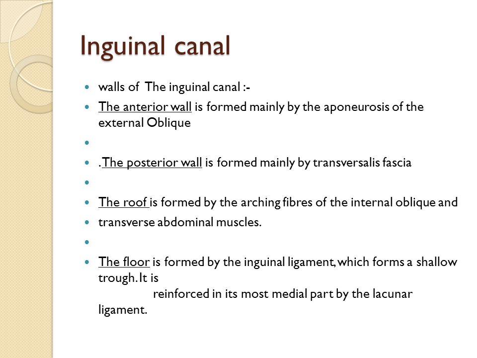 Inguinal canal walls of The inguinal canal :- The anterior wall is formed mainly by the aponeurosis of the external Oblique. The posterior wall is for