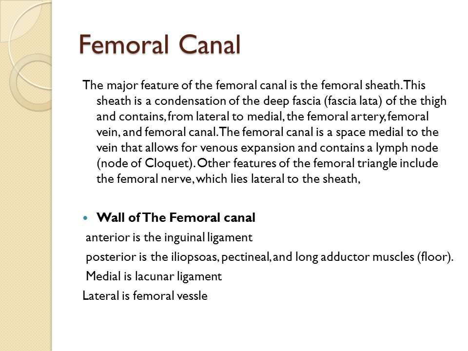 Femoral Canal The major feature of the femoral canal is the femoral sheath.