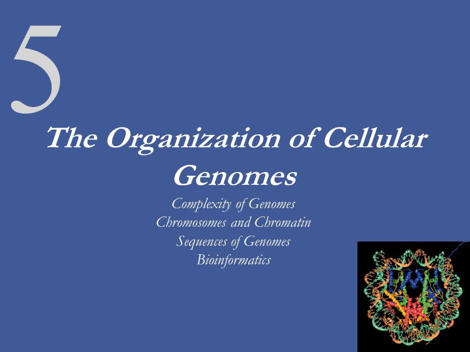 5 The Organization of Cellular Genomes Complexity of Genomes Chromosomes and Chromatin Sequences of Genomes Bioinformatics