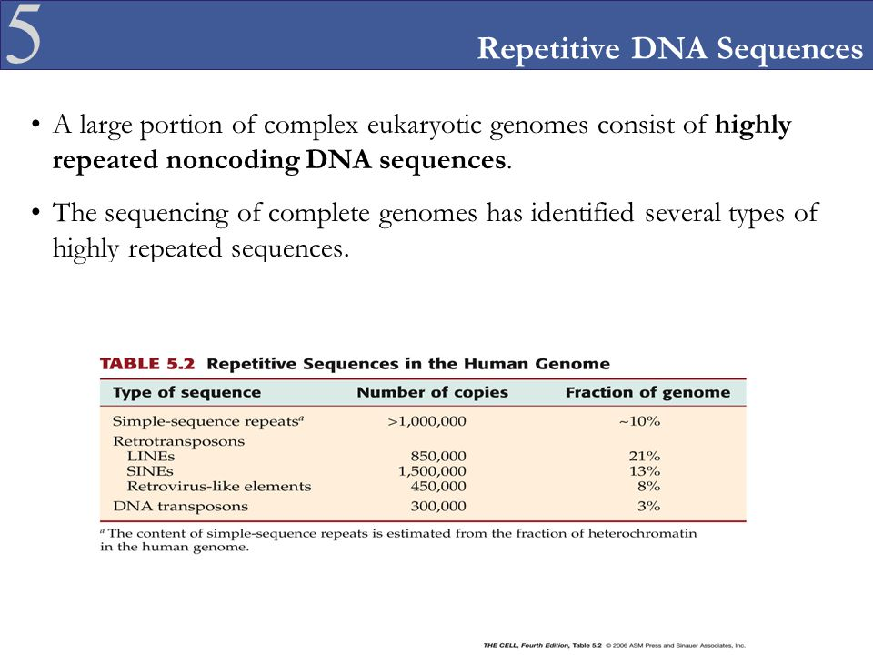 5 Repetitive DNA Sequences A large portion of complex eukaryotic genomes consist of highly repeated noncoding DNA sequences. The sequencing of complet
