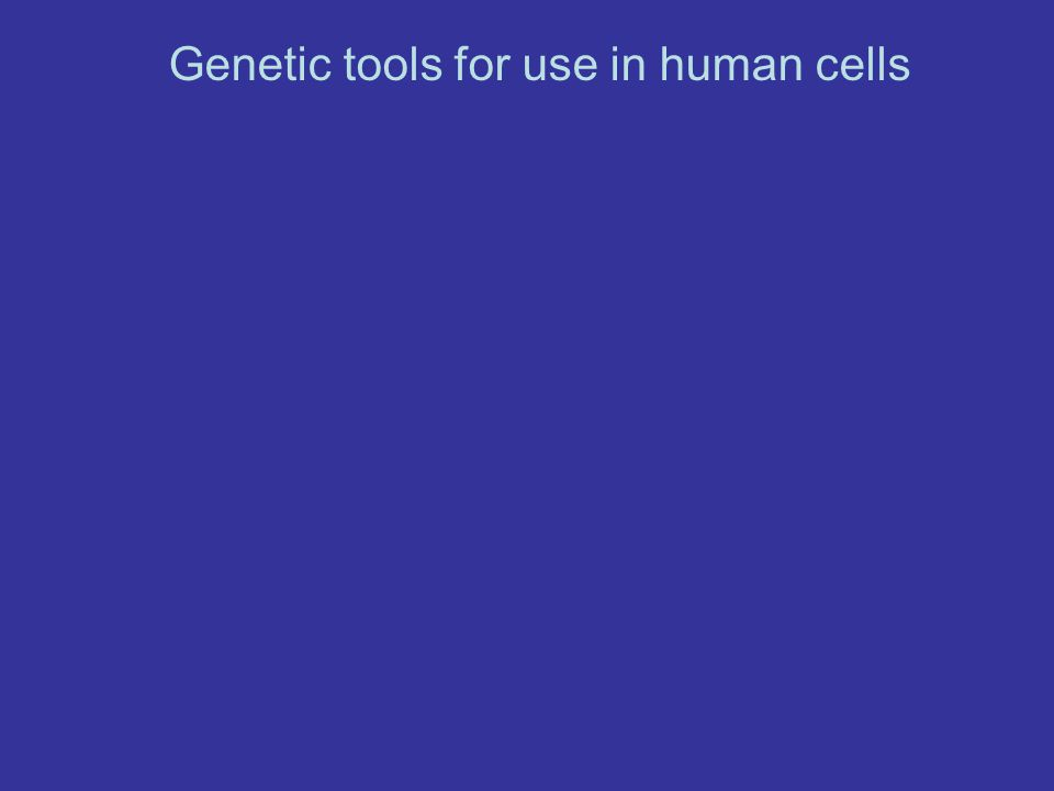 Genetic tools for use in human cells