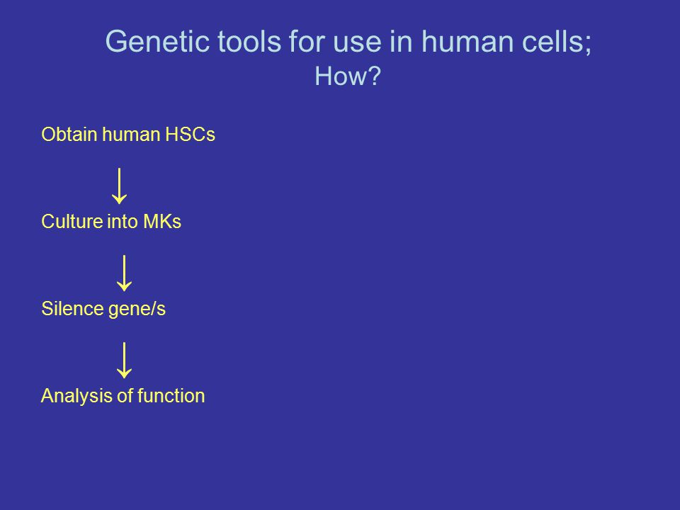 Obtain human HSCs ↓ Culture into MKs ↓ Silence gene/s ↓ Analysis of function Genetic tools for use in human cells; How?
