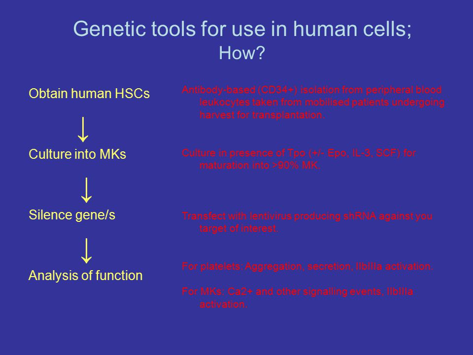 Obtain human HSCs ↓ Culture into MKs ↓ Silence gene/s ↓ Analysis of function Antibody-based (CD34+) isolation from peripheral blood leukocytes taken f