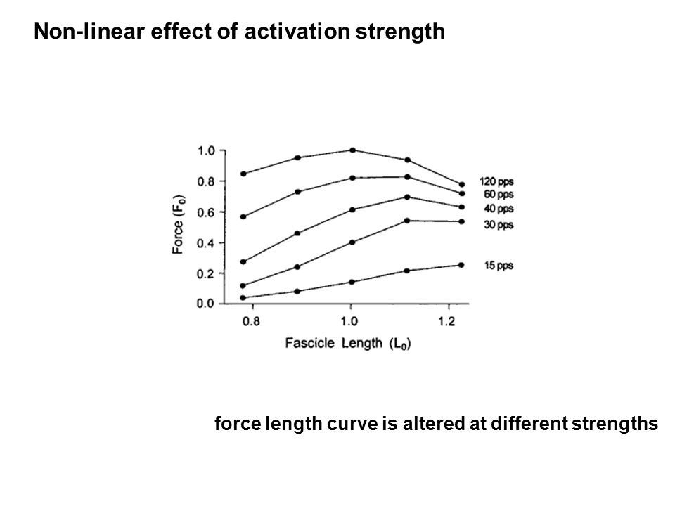 force length curve is altered at different strengths Non-linear effect of activation strength