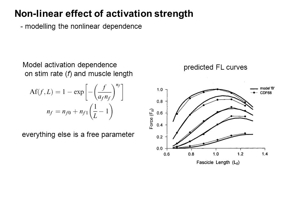 Model activation dependence on stim rate (f) and muscle length predicted FL curves everything else is a free parameter Non-linear effect of activation