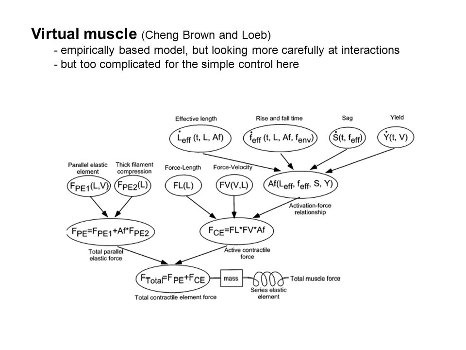 Virtual muscle (Cheng Brown and Loeb) - empirically based model, but looking more carefully at interactions - but too complicated for the simple contr
