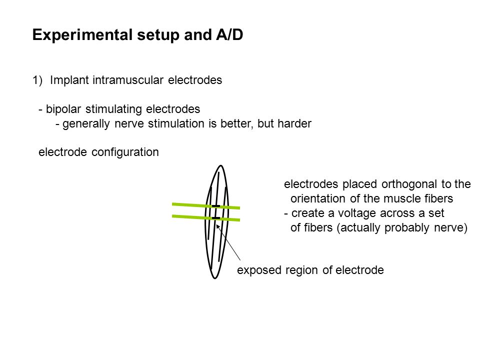 Experimental setup and A/D 1)Implant intramuscular electrodes - bipolar stimulating electrodes - generally nerve stimulation is better, but harder electrode configuration electrodes placed orthogonal to the orientation of the muscle fibers - create a voltage across a set of fibers (actually probably nerve) exposed region of electrode