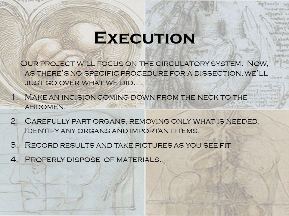 Execution Our project will focus on the circulatory system.