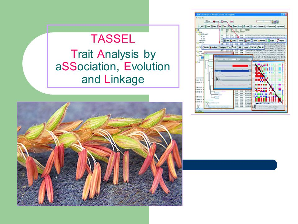 TASSEL Trait Analysis by aSSociation, Evolution and Linkage